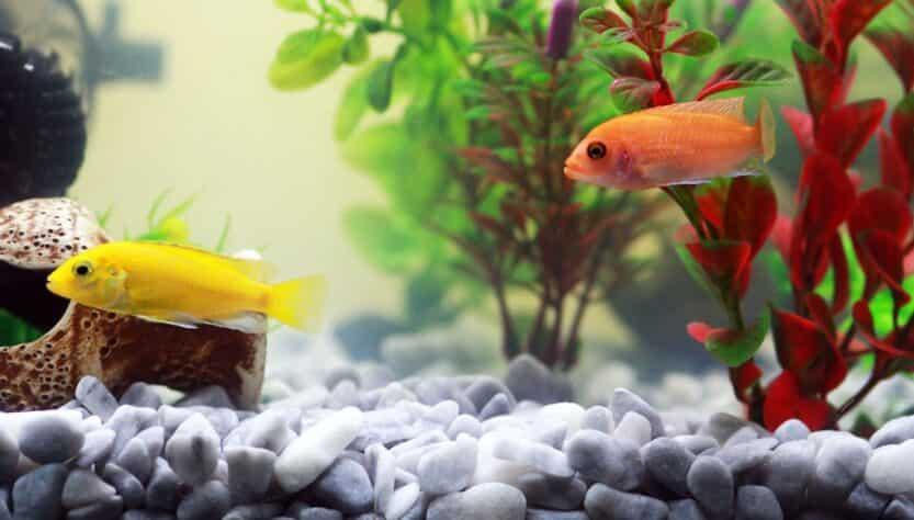 akvárium aljzat