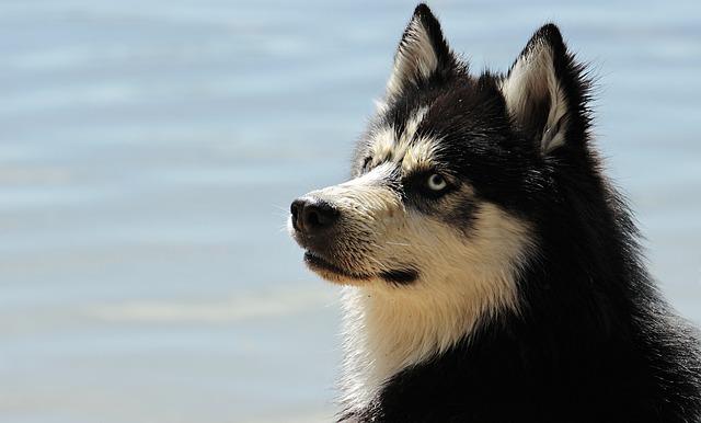 kutyaszőr allergia